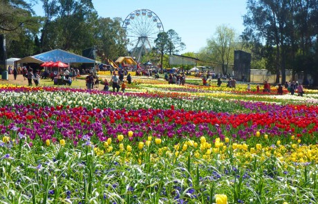 Floriade is the largest floral festival in the southern hemisphere and Australia's biggest celebration of spring.
